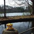 三宝寺池午後のひと時