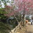 石神井公園内