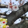 桜だ!!!