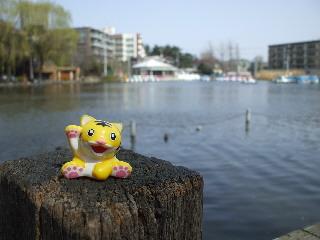 石神井公園・ボート池