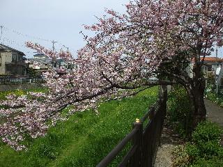 からぼり川08