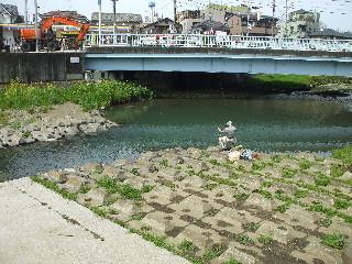 かわぼり川の釣り人08