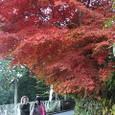 山頂付近の紅葉